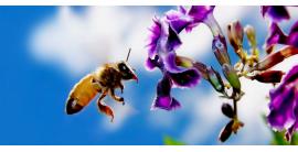 Miele Toscano, un prodotto speciale